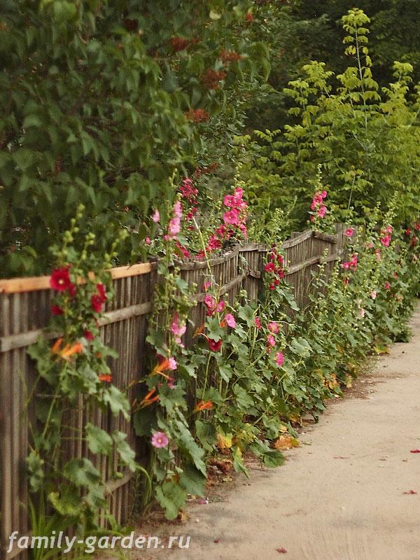 Дизайн цветников-деревенский стиль