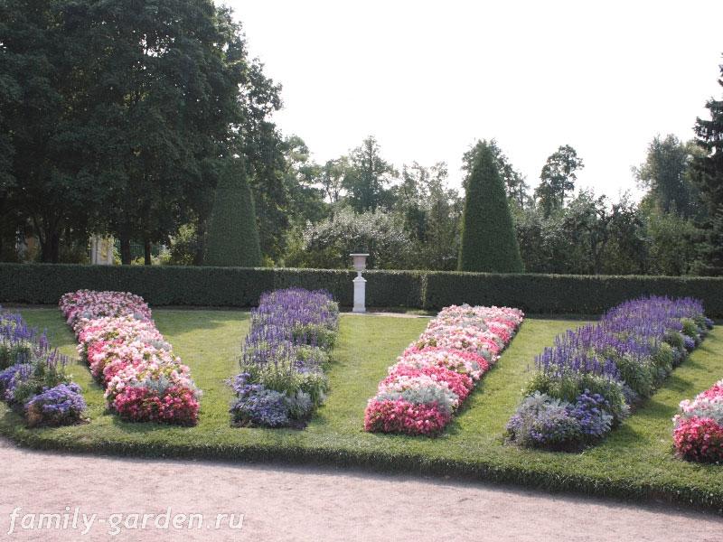 Устройство регулярных цветников
